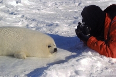 With a baby seal on the frozen sea, Québec, Canada. (Photo by Shin & Chiaki Chiro)