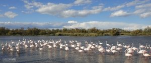 FRA0711_0031_Pink flamingos in Camargue (Southern France)