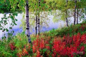 FIN0904_0034_Autumn colours in Lapland (Finland)