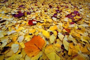 MIL1115_0049_Palette of autumn colours (Giardini Pubblici, Milan, Italy)