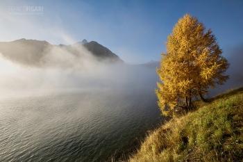 SV1019_0780_Morning fog on lake of Sils (Engadina, Switzerland)