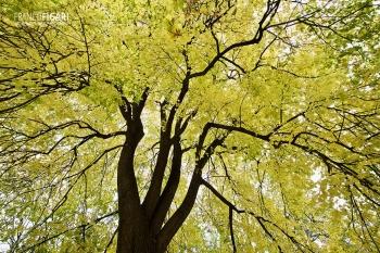 VIE1119_0783_Autumn colours in the Botanical garden in Wien (Austria)