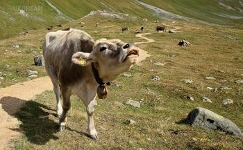 SVI0919_0613_Albula Pass (Engadina, Switzerland)
