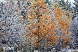 FIN1014_0091_First autumn frosts (Finland)
