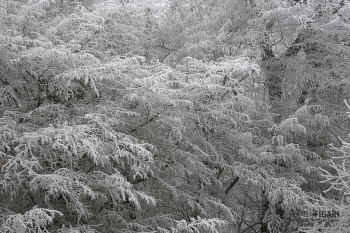 FRA1217_0101_Soft rime in the Bourgogne-Franche-Comtè region (France)