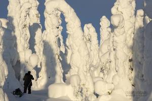 RII0215_0196_Riisitunturi National Park (Finland)