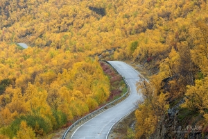 FIN0915_0250_Autumn colours near Norwegian border (Western Lapland, Finland)