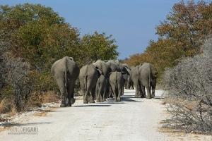 NAM0815_0257_Rush hour in Etosha National Park (Namibia)