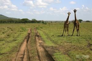 TAN0109_0258_Serengeti National Park (Tanzania)