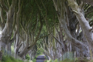 IRL0714_0269_The Dark Hedges (Northern Ireland Countryside)
