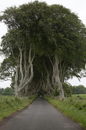 IRL0714_0260_The Dark Hedges (Northern Ireland)
