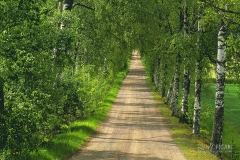 FIN0703_0251_Countryside road (Southern Finland)