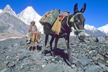 PAK0704_0305_Caravan of mules on the Baltoro glacier (Pakistan)