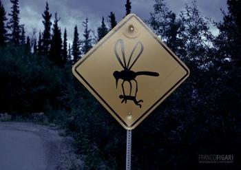 ALA0814_0692_Beware of mosquitoes (Alaska, USA)
