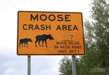 ALA0814_0713_Beware of the moose (Alaska, Usa)