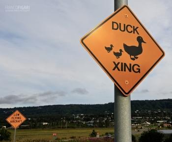 ALA0814_0718_Beware of ducks (Alaska, USA)