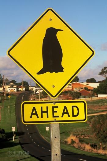 AUS0203_0679_Beware of the penguin (Australia)
