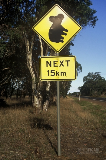 AUS0203_0690_Beware of the koala (Australia)