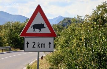 CRO0513_0719_Beware of the wild boar (Croatia)