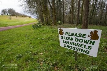 ING0416_0689_Beware of  squirrels (Devon, England)