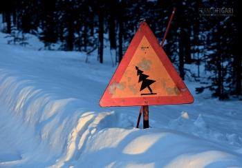 LAP0315_0699_Beware of falling timber (Finland)