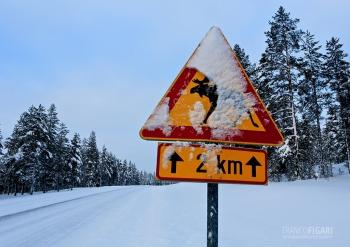 LAP0315_0702_Beware of the elk (Finland)
