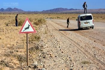 NAM0815_0716_Beware of the springbok (Namibia)