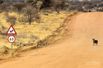 NAM0815_0723_Beware of the worthog (Namibia)
