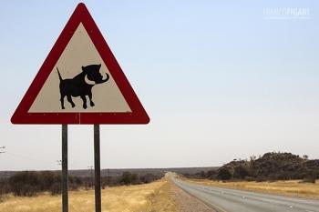 NAMO815_0678_Beware of the warthog (Namibia)