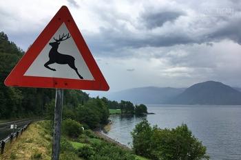 NOR0718_0717_Beware of deer (Norway)