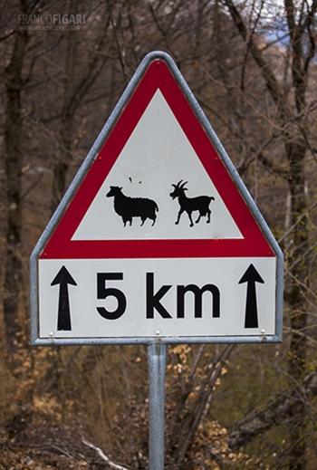 SVI0916_0714_Beware of goats and sheep (Switzerland)
