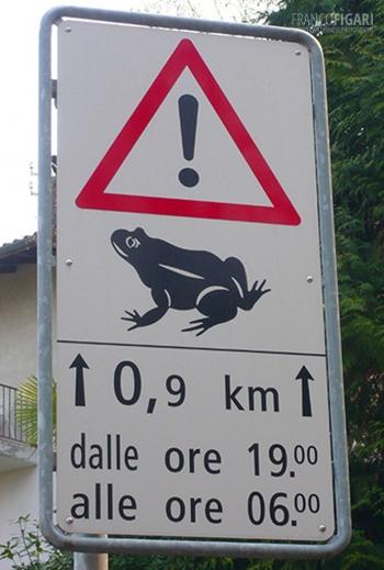 SVIZ0510_0681_Beware of frogs (Switzerland)