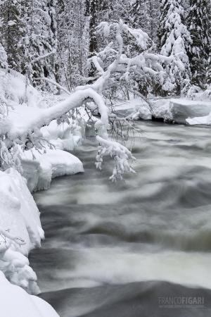 FIN0214_0361_Kitkajoki river in wintertime (Oulanka National Park, Northern Finland)