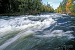 FIN0999_0379_The famous Bear Trail follows Kitkajoki river in Oulanka National Park (Northern Finland)