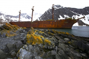 SGE1109_0396_South Georgia was an important center of whaling over 100 years ago. Nowadays the rusted wrecks are the symbol of Nature return