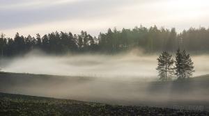 FIN0515_0413_Early morning fog (Finland)