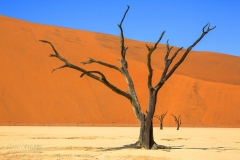 NAM0815_466_In the Namib desert Deadvlei is an ancient clay-bedded lake surrounded by the great red dune of Sossusvlei (Namibia)