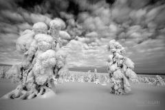 RII0214_0535_A world in black and white (The Finnish Taiga)