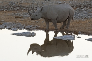 NAM0815_0569_Evening reflections in the water pools of Etosha National Park (Namibia)