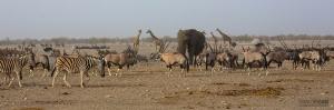 NAM0815_0583_Noah's Ark (Etosha National Park, Namibia)