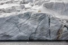 FJL0719_0605_Polar bear on the glacier (Franz Josef Land, Russia)